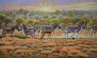Zebra, Kruger National Park. S.A.