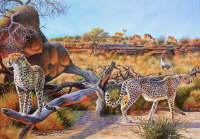 Cheetah and Springbuck